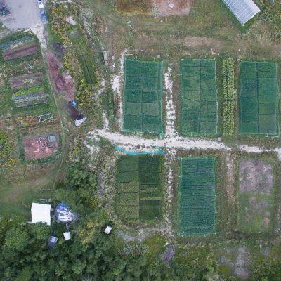 wildfolk farm